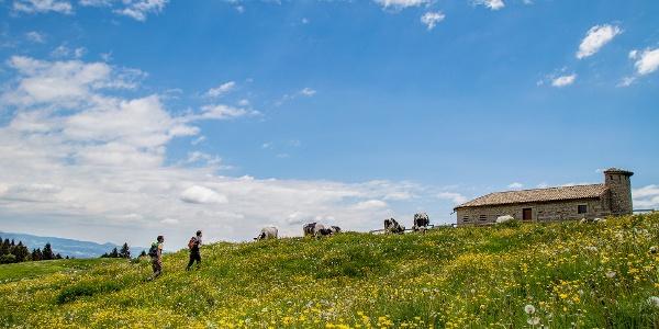 Fioriture del Monte Baldo - La Via Delle PREALPI