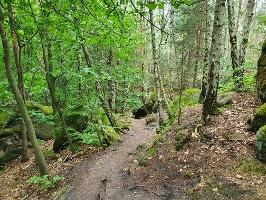 Foto Auf dem Forststeig zum Labyrinth