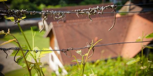 Blick aus dem Weinberg auf den Hof