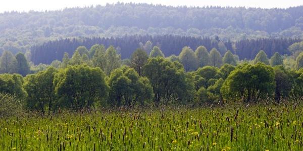 Aussicht im Naturpark Teutoburger Wald / Eggegebirge bei Bad Driburg