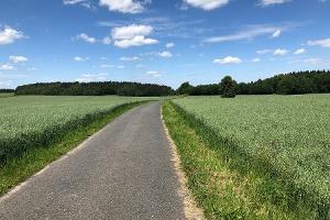 Foto Weg von Langburkersdorf zum Hohwald