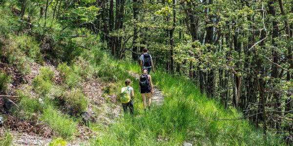 Wandern durch lichte Wälder