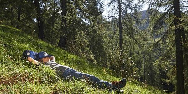 Die Lärchenwälder zwischen Tschiertschen und Praden laden zu einer kleinen Pause ein.