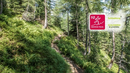 Neualm Trail - Trail #10 in Schladming
