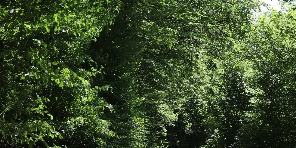 Waldweg bei Nitztal