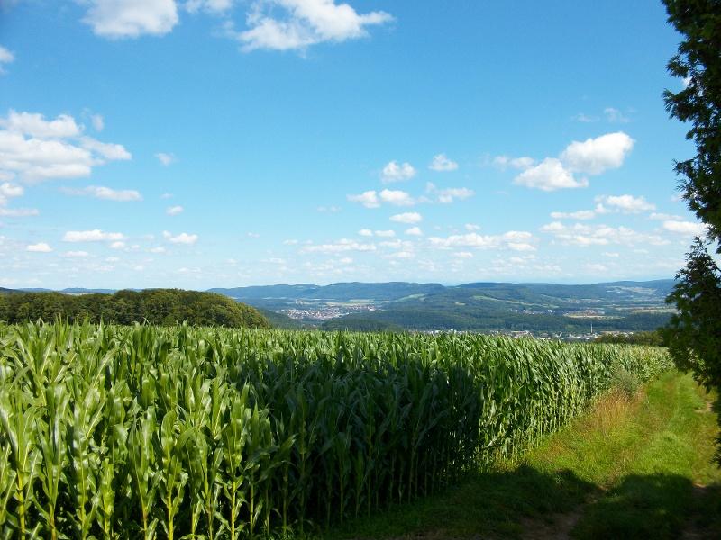 Waldshut-Tiengen: Tour in den Klettgau