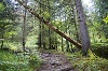 Wanderweg durch den Bergwald - @ Autor: Julian Knacker - © Quelle: Pfronten Tourismus