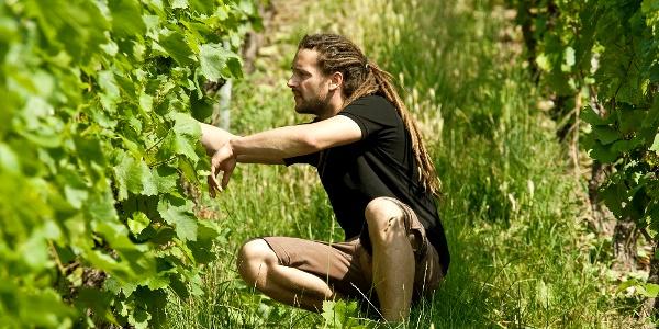 Weingut Dautel in Bönnigheim