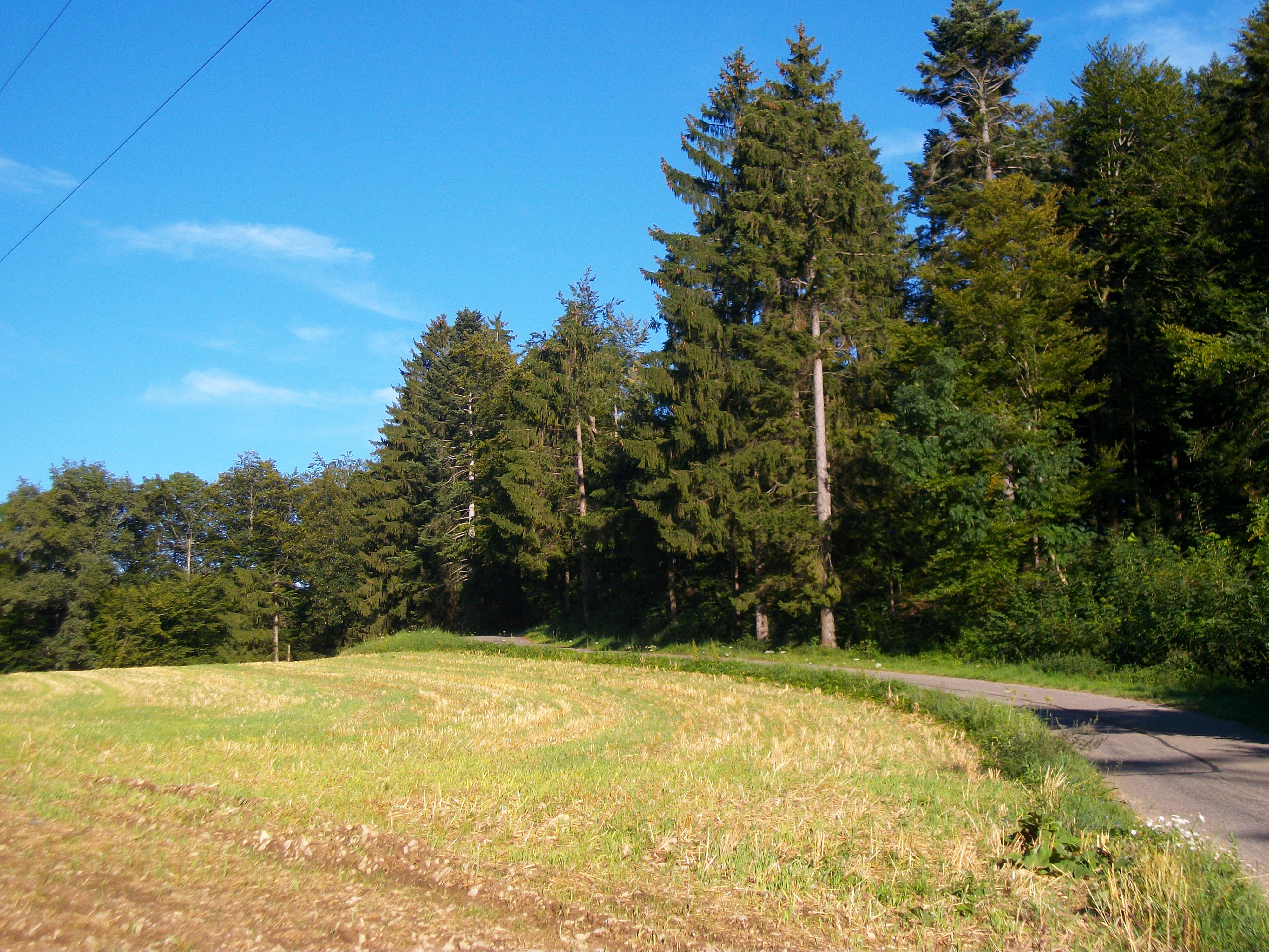 Landschaft am Wegesrand