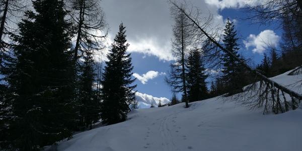 Feste windgepresste Schneeschuhspur beim Aufstieg auf den Zwiesel