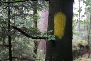 Foto Forststeigmarkierung