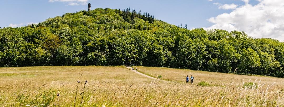 Sommerliches Wandern - Geisingberg