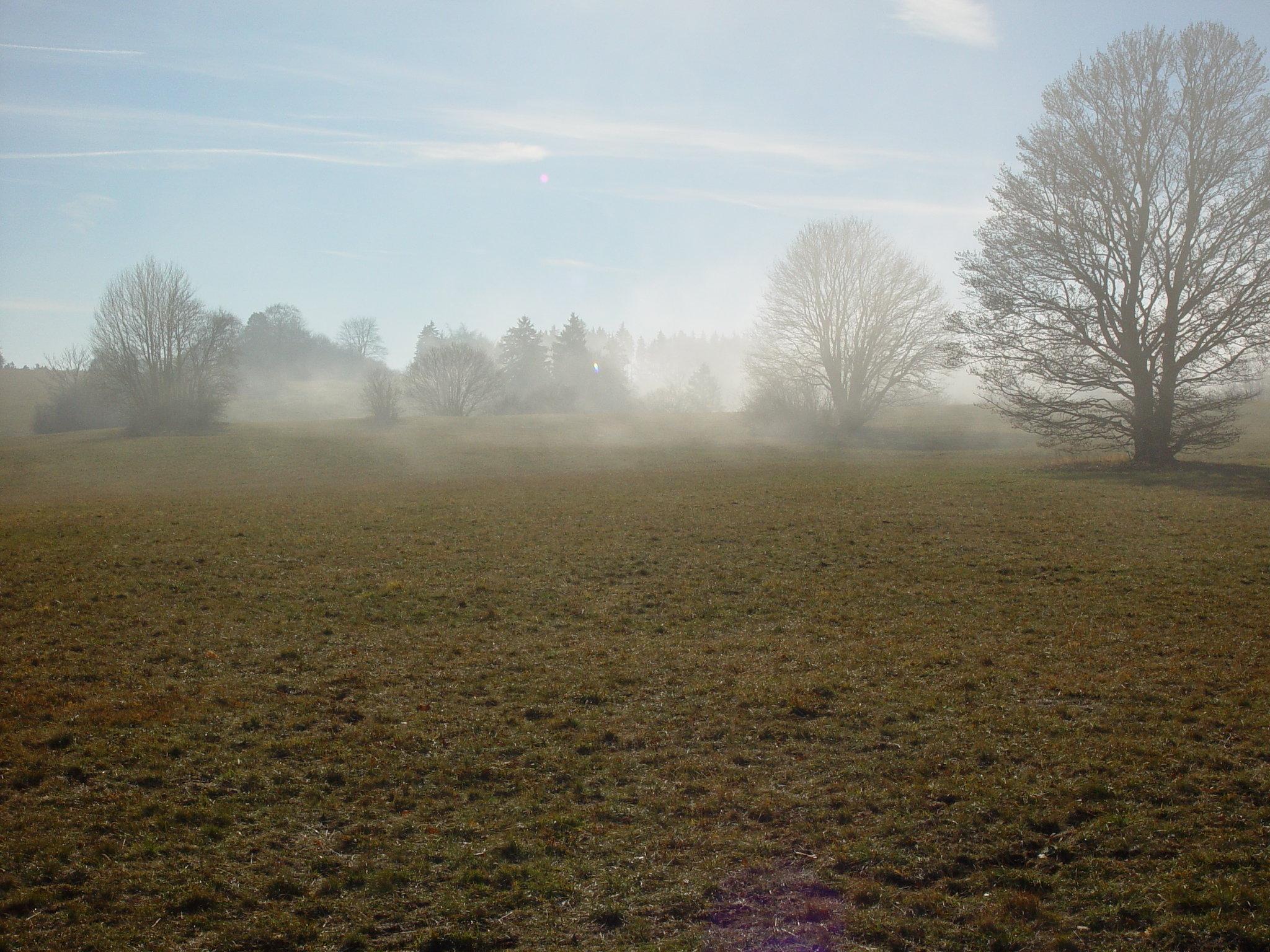 Landschaft bei Meßstetten-Tieringen im Nebel