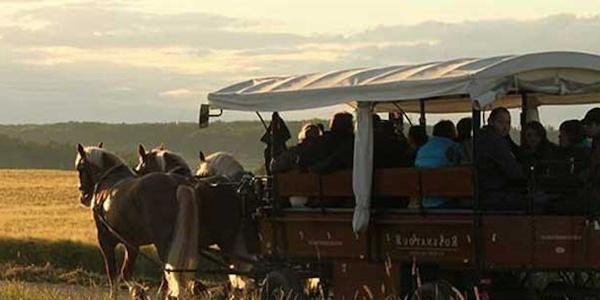 Aufdem Planwagen können bis zu 12 Personen Platz nehmen.