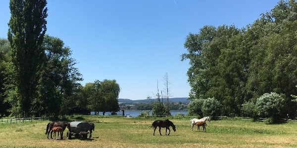 Pferdeweiden im Naturschutzgebiet am See
