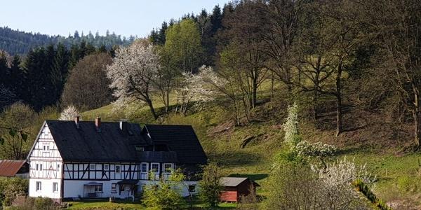 Apartmentwohnung Augustenhofblick
