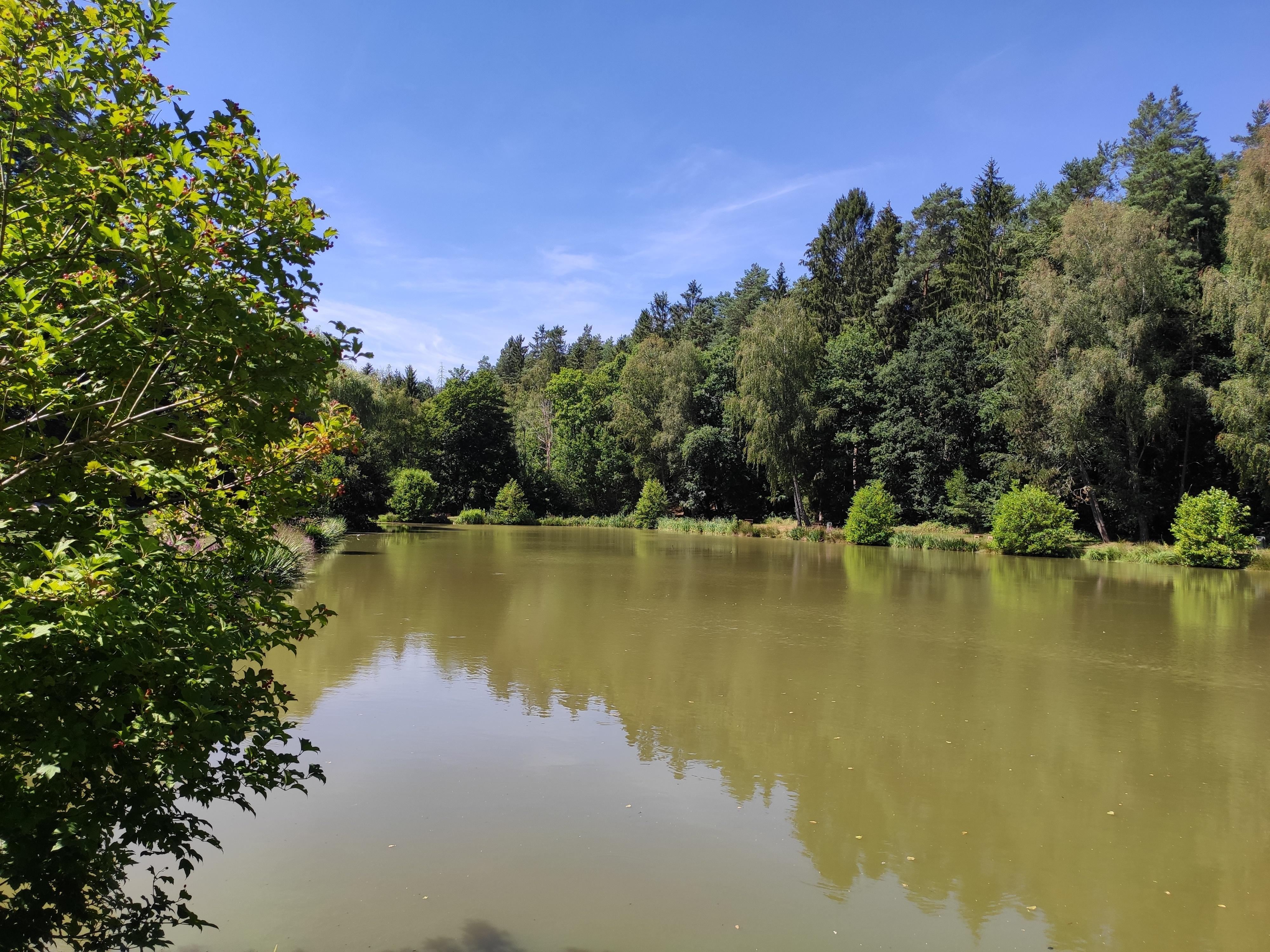 Fischweiher Kirrberg