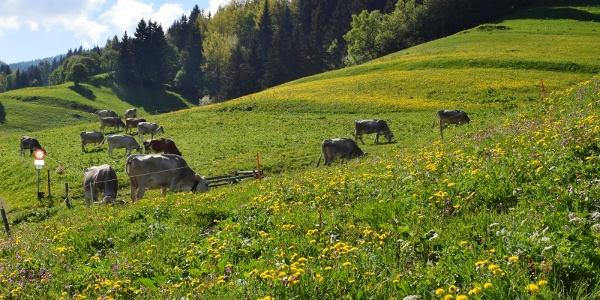 Bergwiese auf dem Weg Richtung Huot