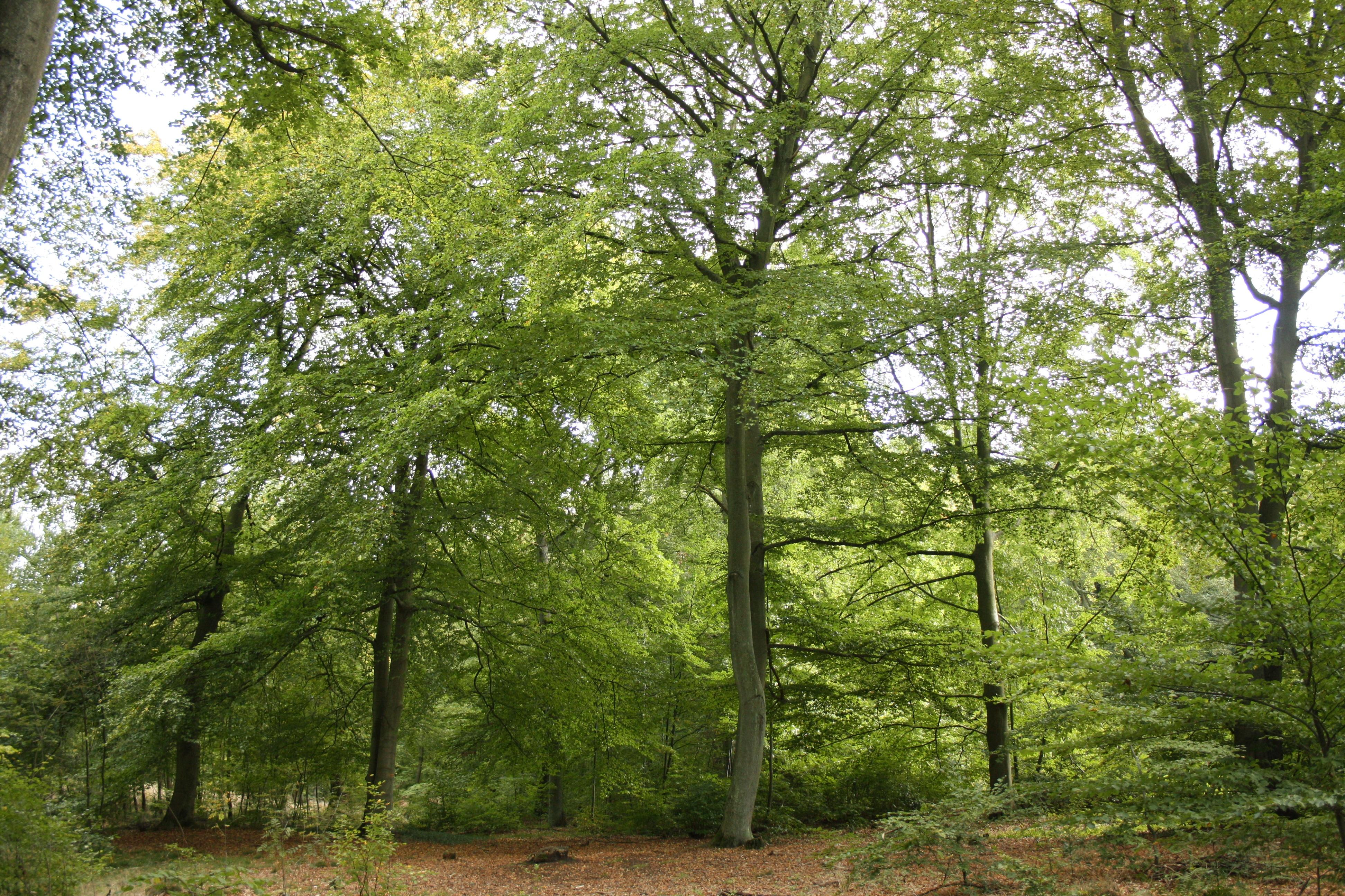 Wald bei Homburg