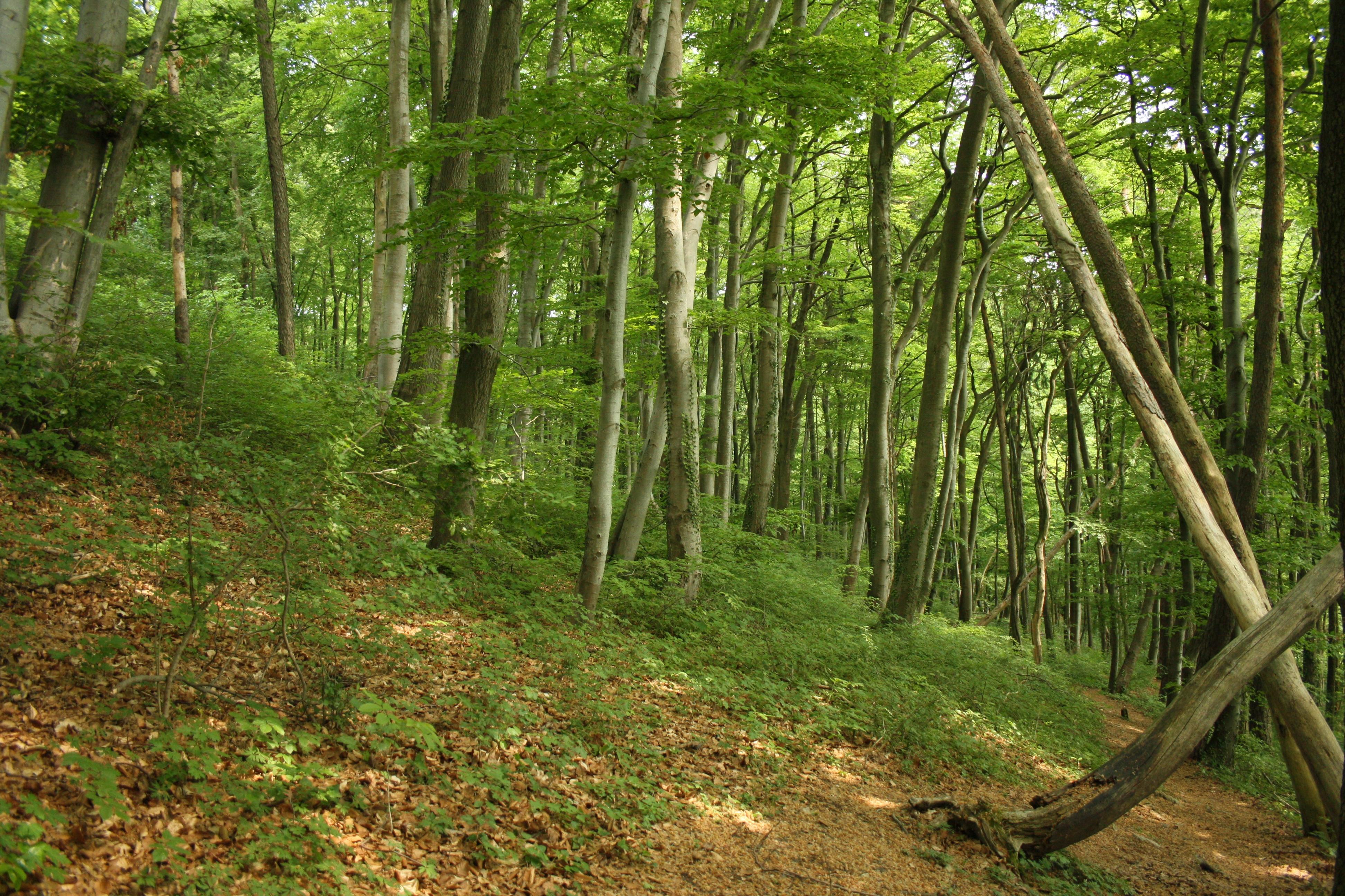 Waldaufnahme