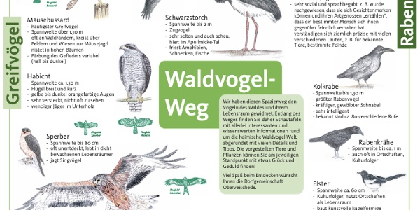 Waldvogelweg Oberveischede