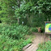 Ab hier im Wald (Belgien)