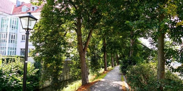 Allee entlang des Bleichgraben - Meiningen