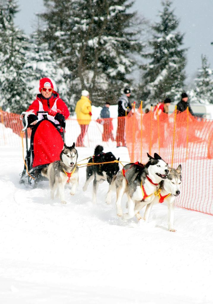 Internationales Schlittenhunderennen jährlich im Februar an der Schwartenbergloipe