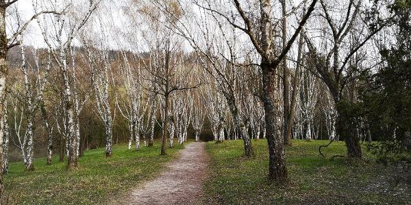 Arboretum Liliental