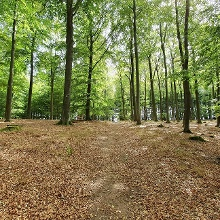 Ebenso schöne, aber halt seltenere Waldwege und  Pfade sind vorhanden