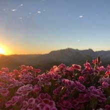 Sonnenaufgang über dem Steinernen Meer