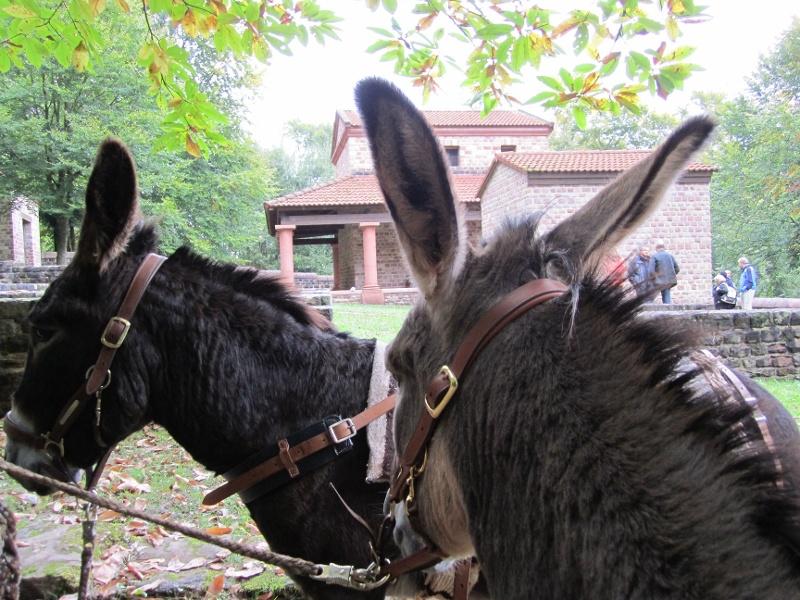 Foto: Eselwanderung zur Römischen Tempelanlage Tawern