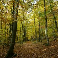 Traumhafter Herbstwald