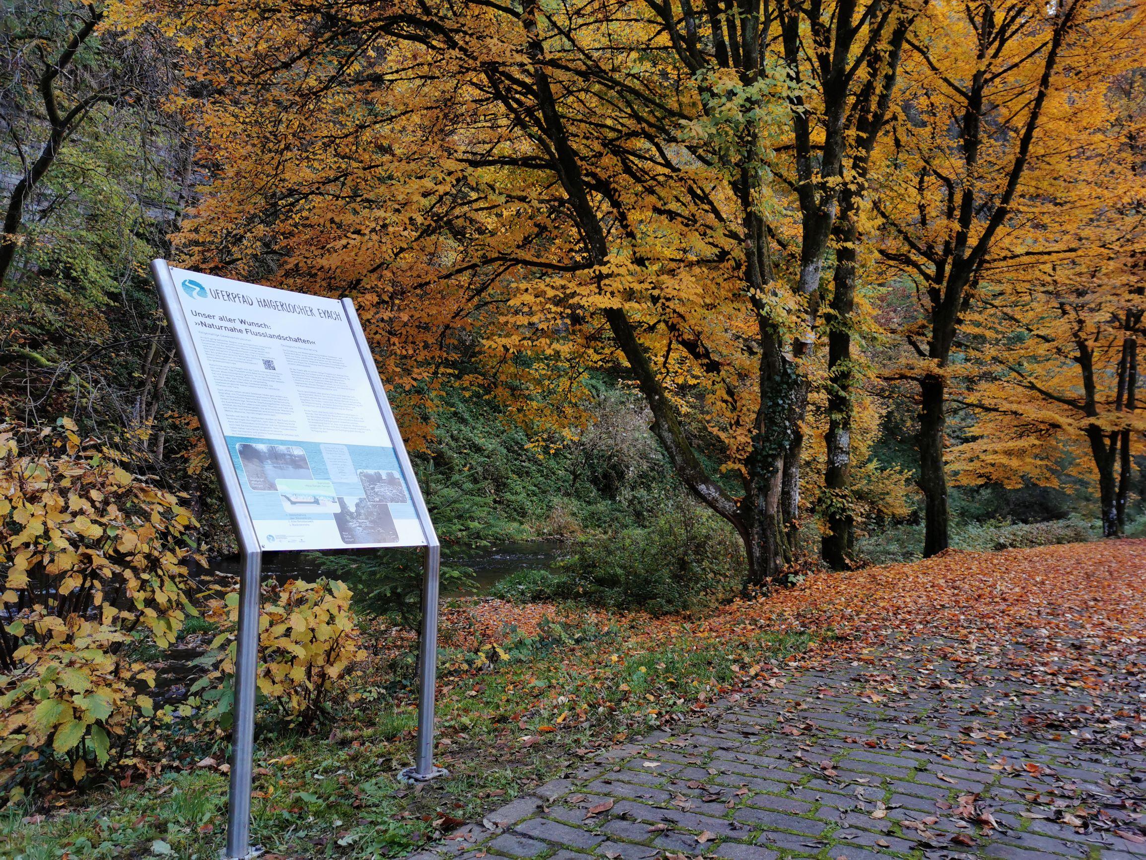 Eine Schautafel des Flusserlebnispfads vor gelben Herbstbäumen