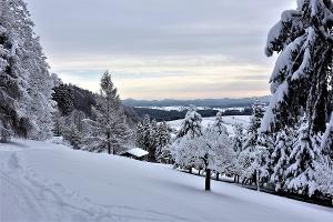 Foto Winterliche Landschaft am Wachberg