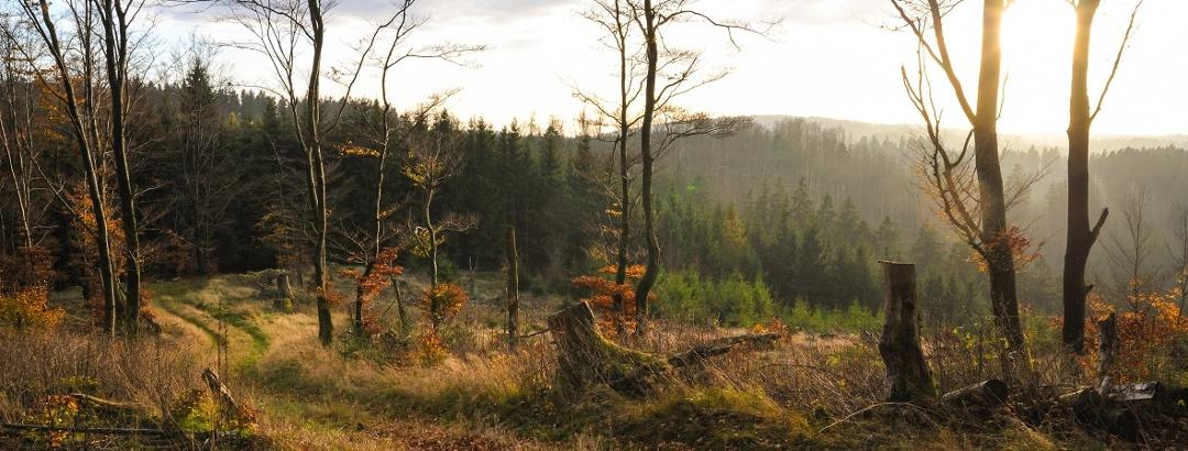 Herbst Impression Wald