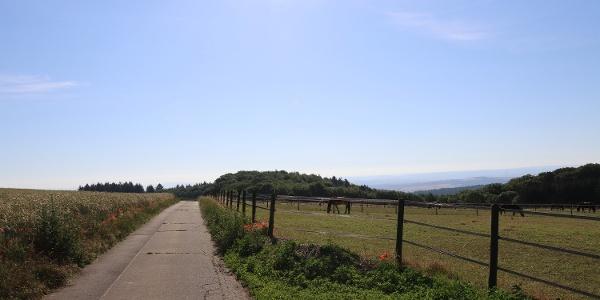 Weg entlang einer Weide bei Kürrenberg