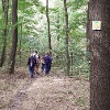 Auf dem Klitscherweg durch den Weißiger Wald
