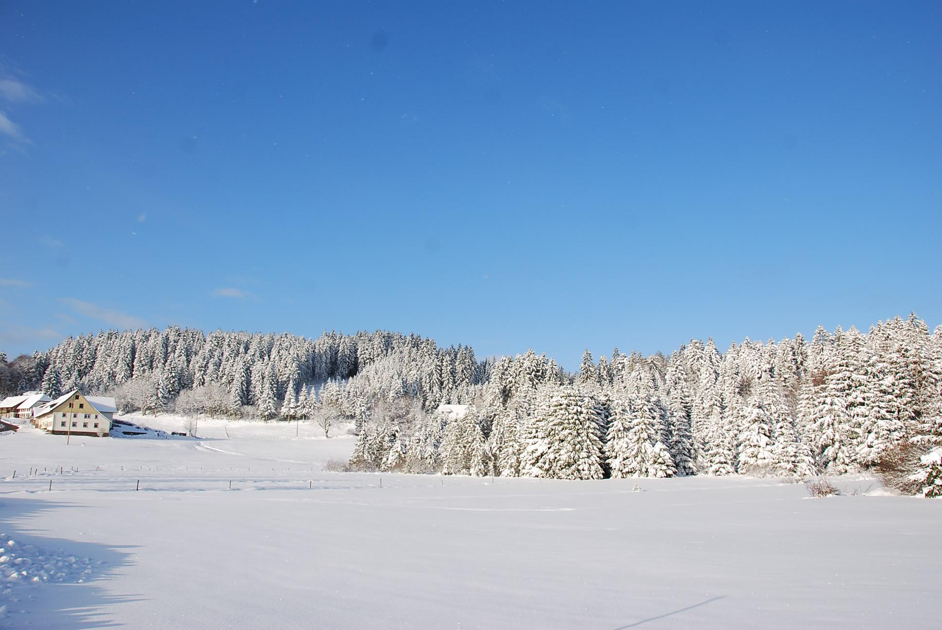 Dachsberg im Schnee