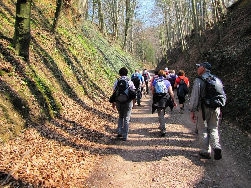 Breisgauer Weinweg 5.Etappe Ettenheim nach Lahr