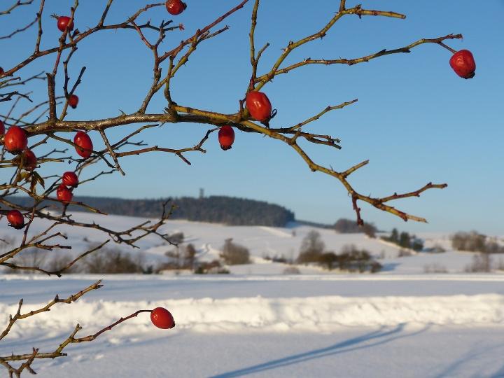 Foto Winterlandschaft bei HInterhermsdorf