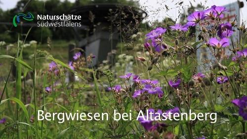 Bergwiesen bei Altastenberg - Naturerlebnisweg westlich von Winterberg