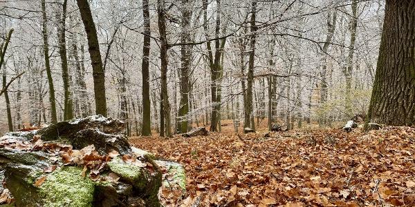 Pădurea din apropiere de Bazna