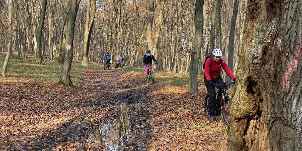 Traversarea pădurii dintre Bazna și Mediaș