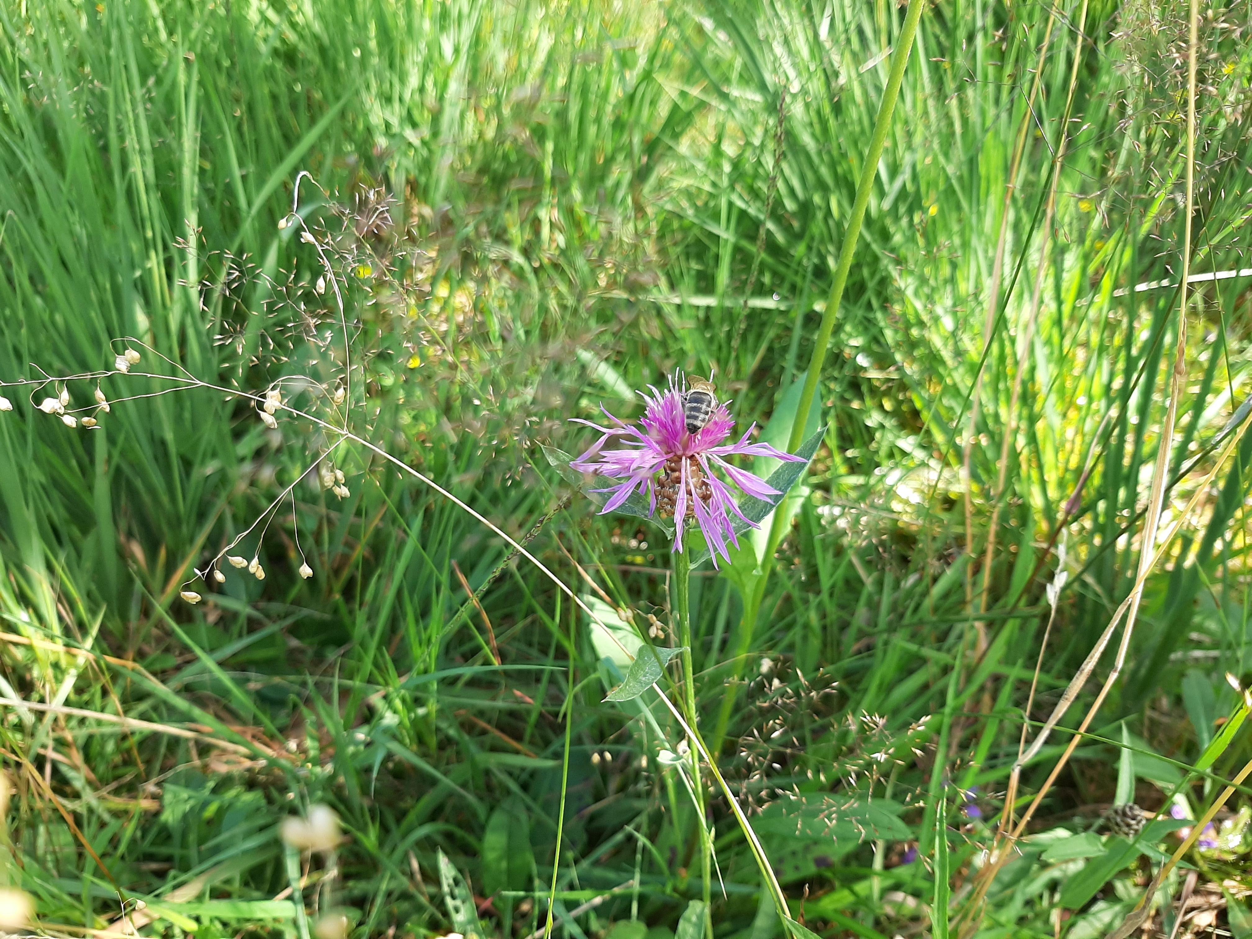 Blumen im Moor