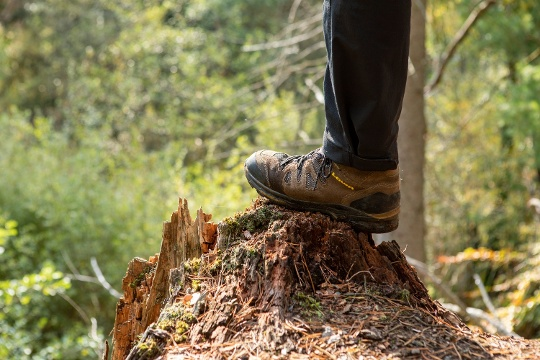 Fuß Wanderer im Laubwald