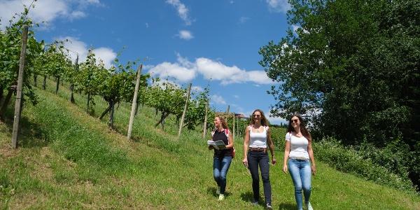 Wandern am Weg zum Weingarten