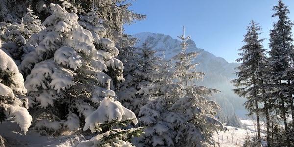 Winterwanderweg Höchst Bild 11