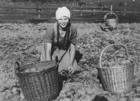 Kartoffellese Ahlbershausen