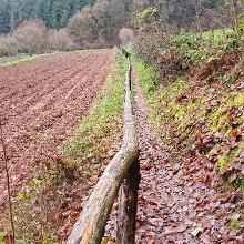 Schnurstracks in den Wald hinein